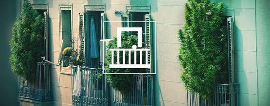 Waarom Zou Je Cannabis Moeten Kweken Op Je Balkon Of Terras?