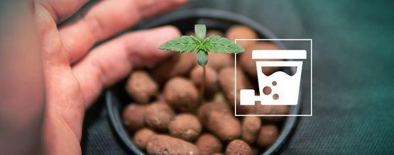 Hoe Genereer Je Enorme Cannabisoogsten Met DWC?