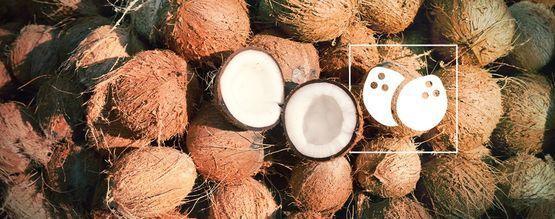 Alles Over Cannabis In Kokos Kweken