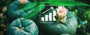 Peyote Zaden: Kweek Je Eigen Peyote Cactus