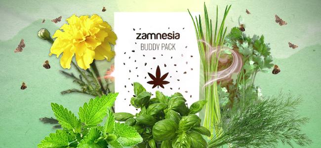 Gezelschapsplanten cannabis