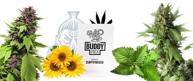 verbergen cannabis te kweken metgezel