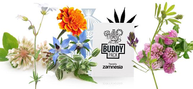Cannabis metgezel voeding