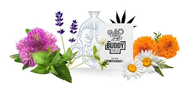 Gezelschapsplant buddy pack cannabis