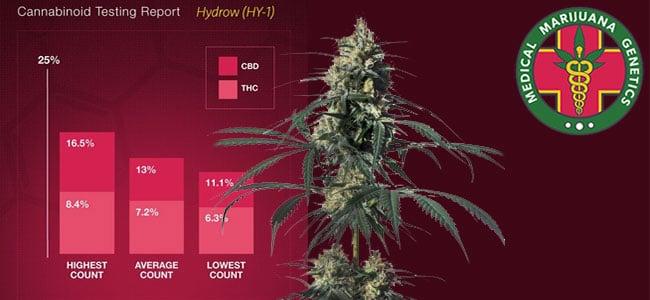 Hyidrow medical marijuana genetics
