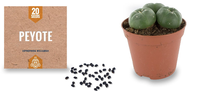 Peyote zaden