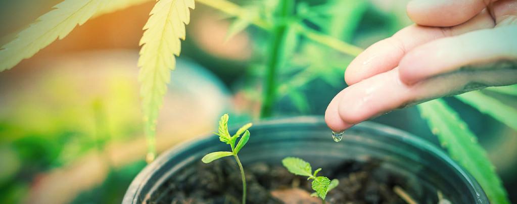 Beste Water Voor Cannabis Planten