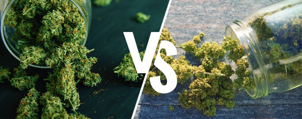 Binnen of buiten kweken: Welke methode geeft de beste cannabis?