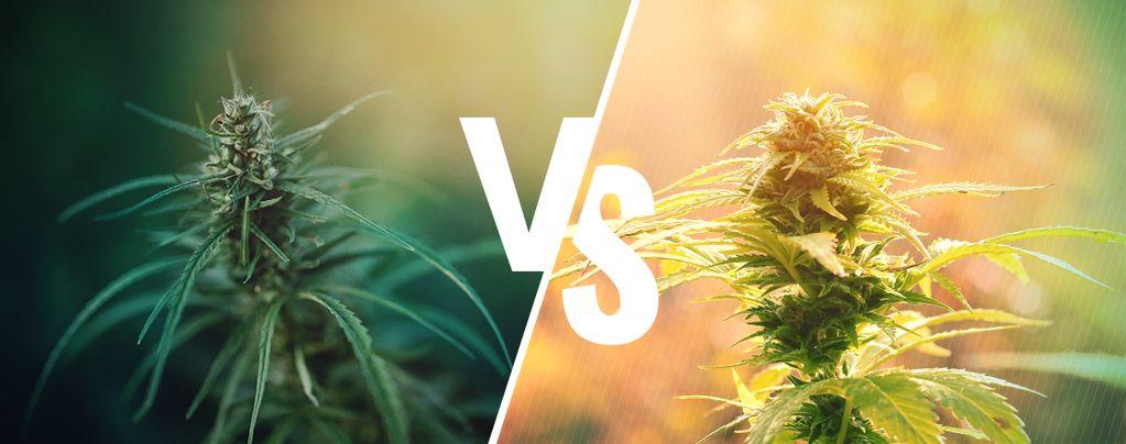 Het Verschil Tussen Hennep En Cannabis