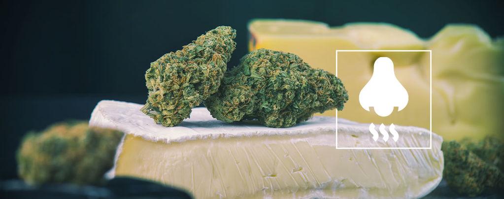 Cheese soorten: Wat gaat er schuil achter de geur?