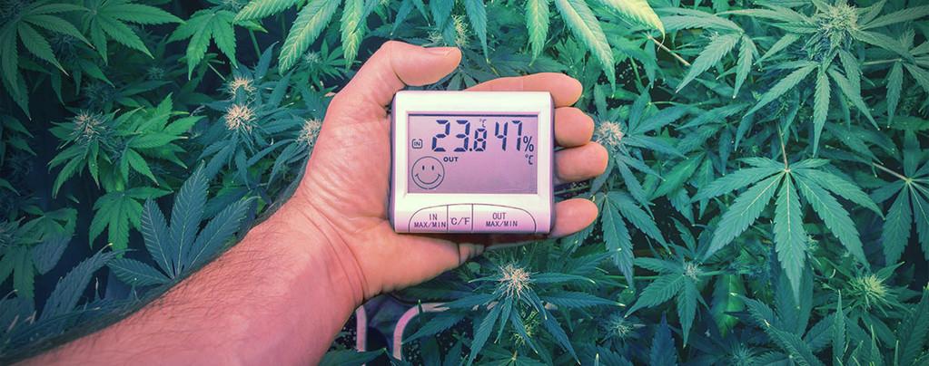 Ultieme Temperaturen Kweken Cannabis
