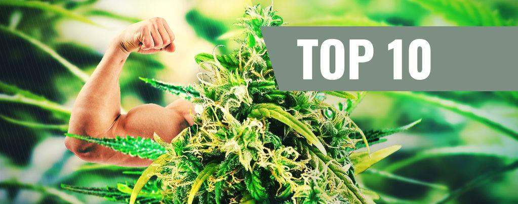 Top 10 THC-Rijke Strains