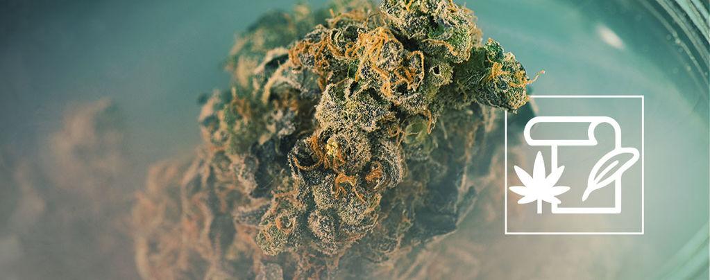 Cannabis Geschiedenis: De Oorsprong Van Skunk