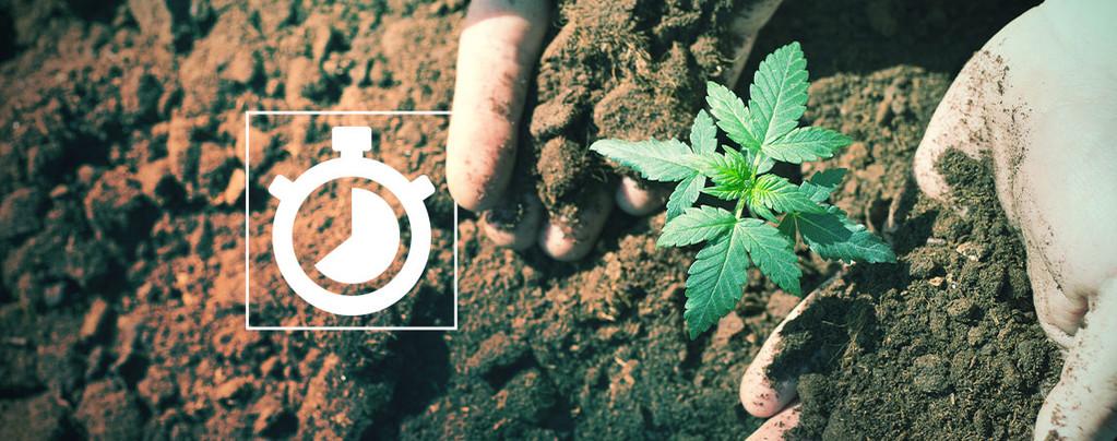 Tijd Cannabis Kweken