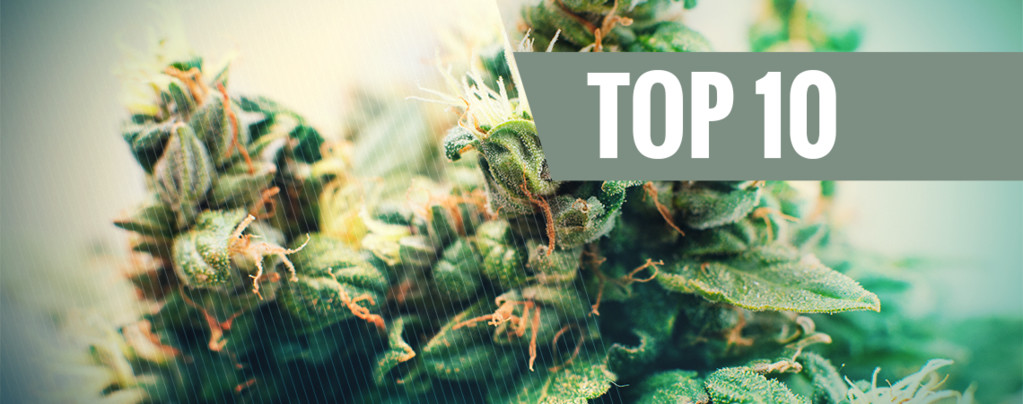 Autoflowering Cannabis Soorten