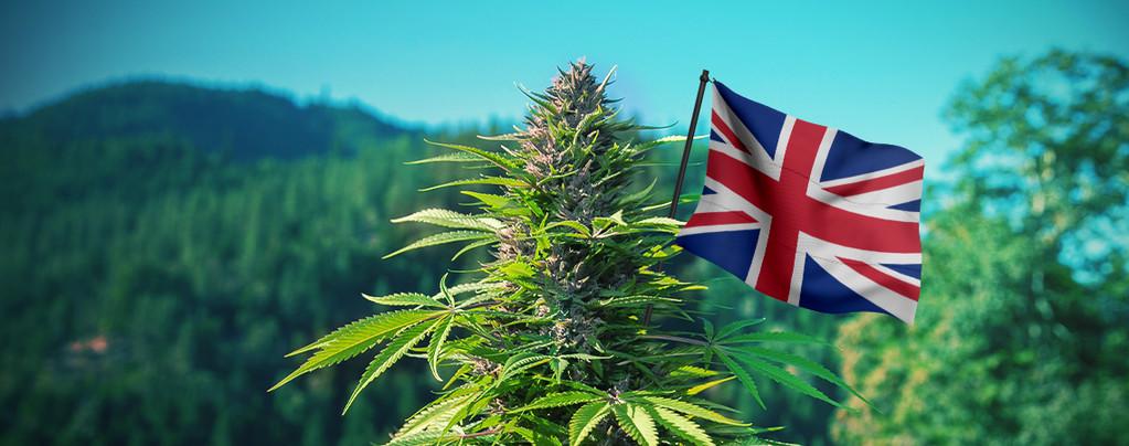 De Beste Outdoor Cannabis Strains Voor Het Verenigd Koninkrijk