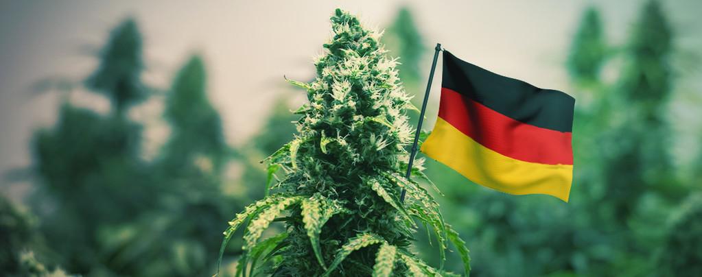 Beste Wiet Om In Duitsland Te Kweken