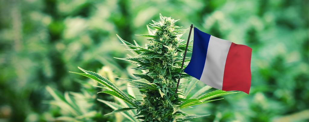 Beste Cannabissoorten In Frankrijk