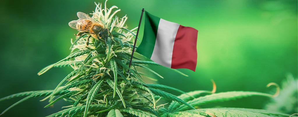 Beste Cannabis zaden Italië