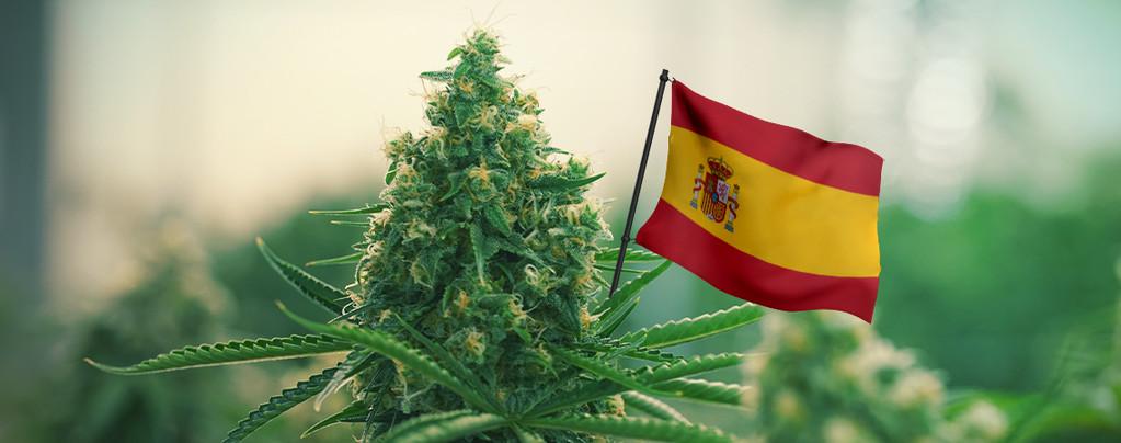 Beste cannabis soorten spanje