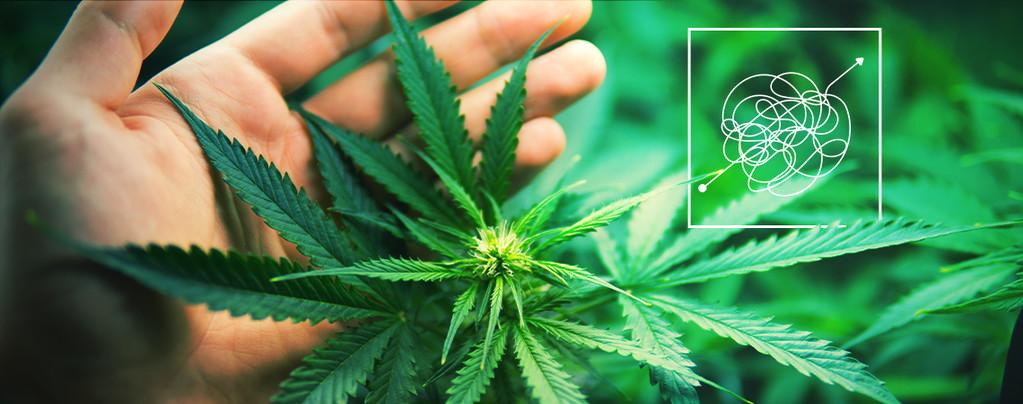 Geld Cannabis Strains