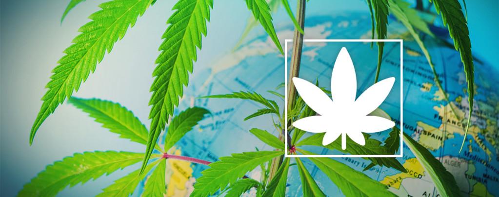 Legaal Cannabis Roken Europa
