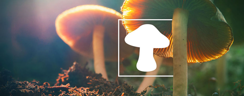 Soorten Magic Mushrooms