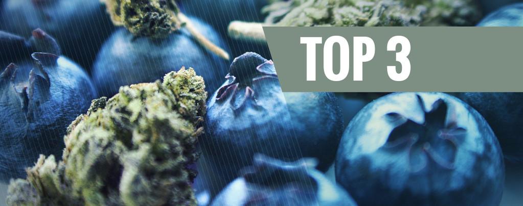 Blueberry Cannabis