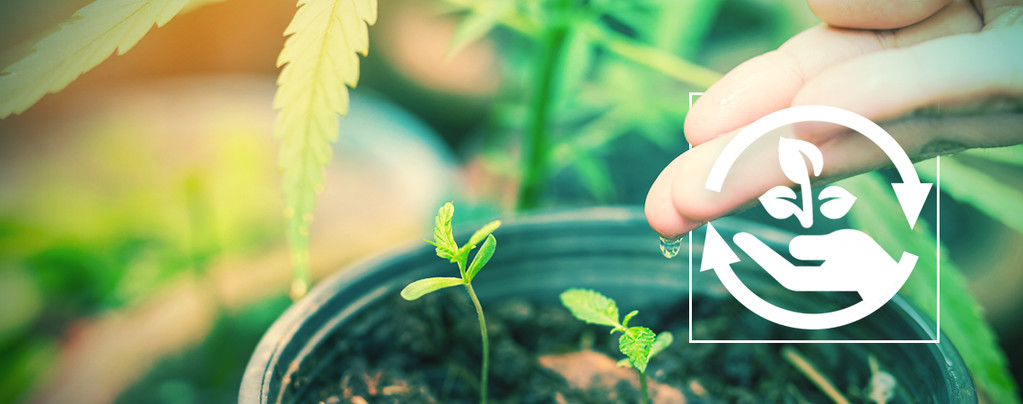 Stadia Bij Het Kweken Van Cannabis
