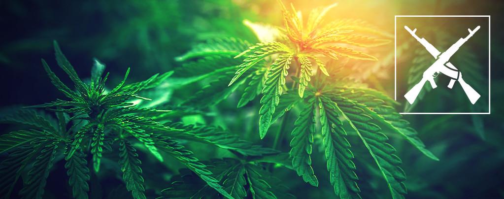 AK-47 Cannabissoorten