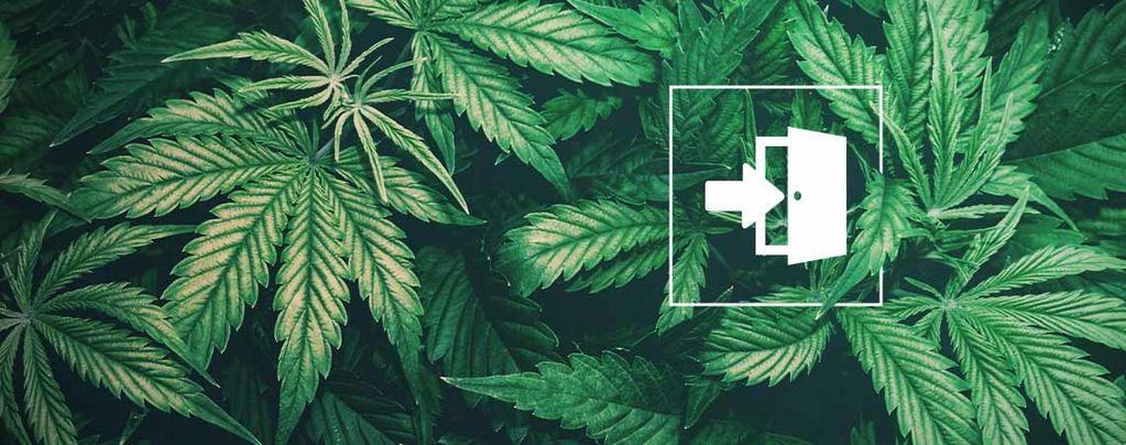 Hoe Kweek Je Binnen Cannabis?