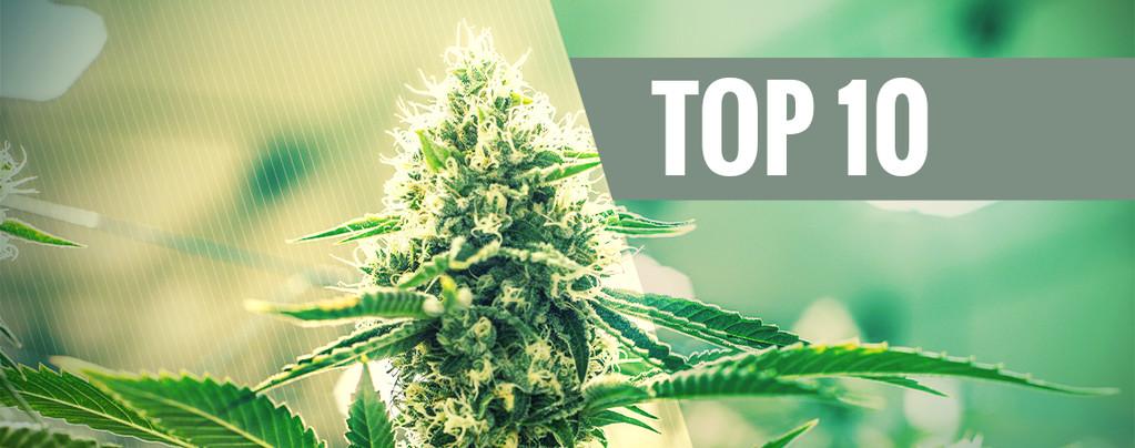 Kush Cannabis Soorten