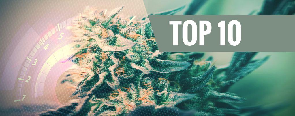 Super Snelle Cannabis Soorten