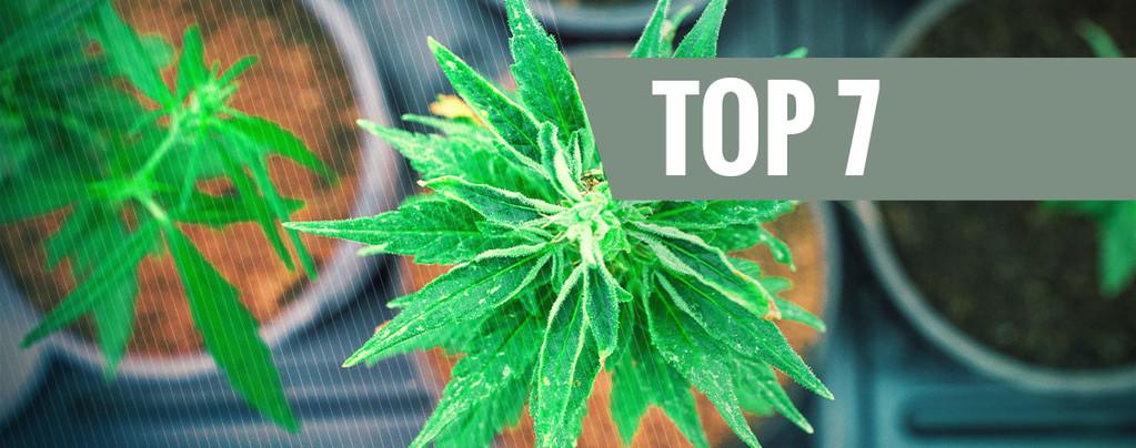 Cannabissoorten Met Een Unieke THC:CBD Verhouding