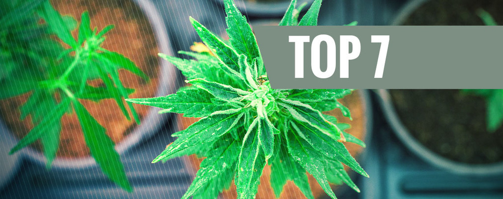 Cannabissoorten Unieke THC:CBD Verhouding