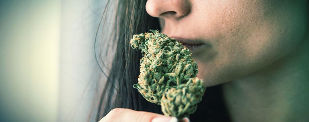Elimineer De Geur Van Cannabis