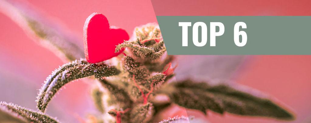 Cannabis Strains Voor Valentijnsdag