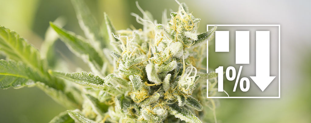 Cannabis Strains Onder 1% THC