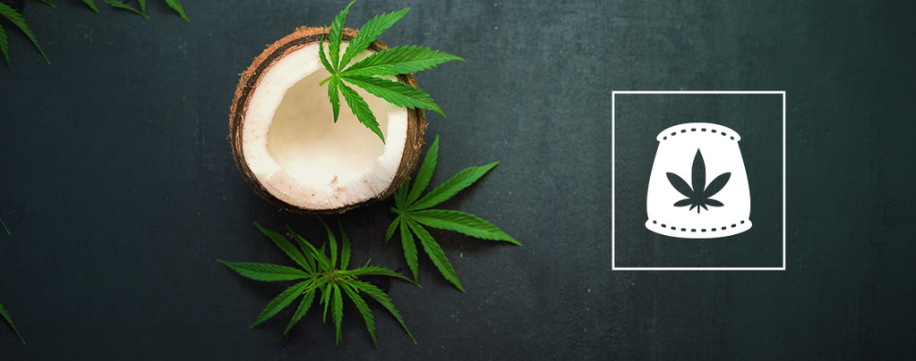 Kokoswater Als Biologische Meststof Voor Cannabis