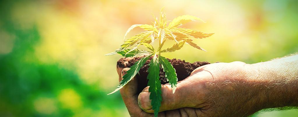 Wat Je Zou Moeten Weten Voordat Je Wiet Gaat Kweken