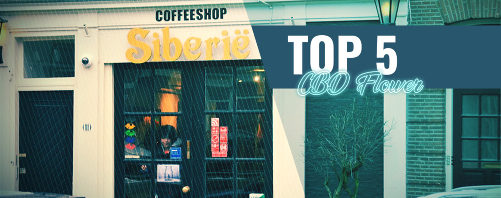 Top 5 Coffeeshops Voor CBD-wiet