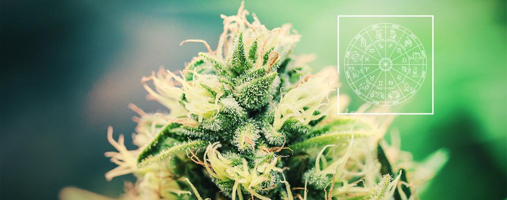 De Perfecte Cannabis Strain Voor Elk Sterrenbeeld