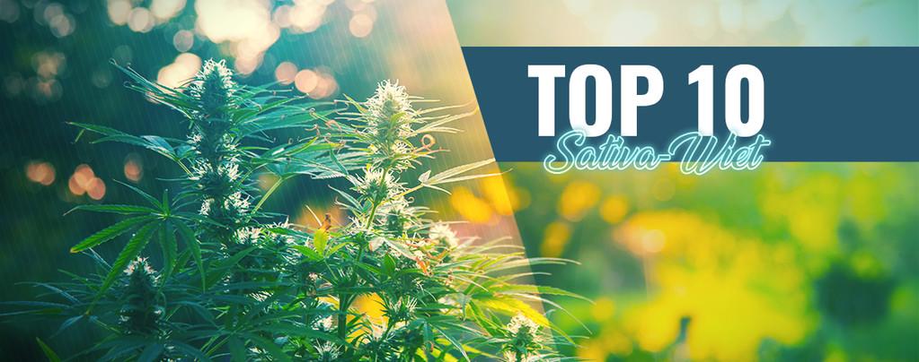 Top 10 Sativa-Wiet In Amsterdam