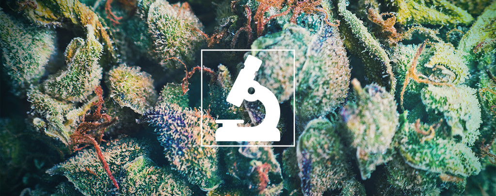 Voordelen Van Een Microscoop Voor Cannabiskwekers En -Gebruikers
