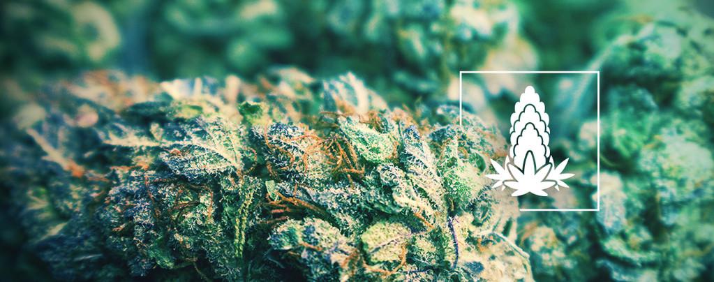 Voor Dichtere Cannabistoppen
