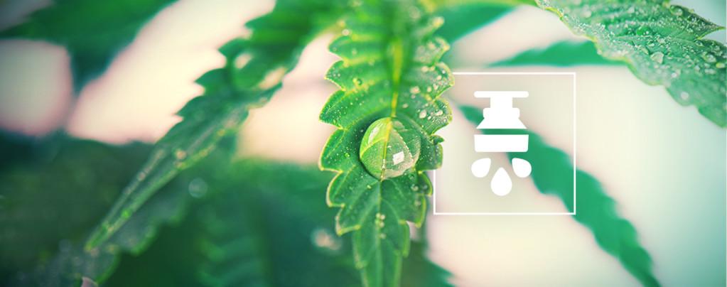 Voordelen Van Het Gebruik Van Een Irrigatiesysteem