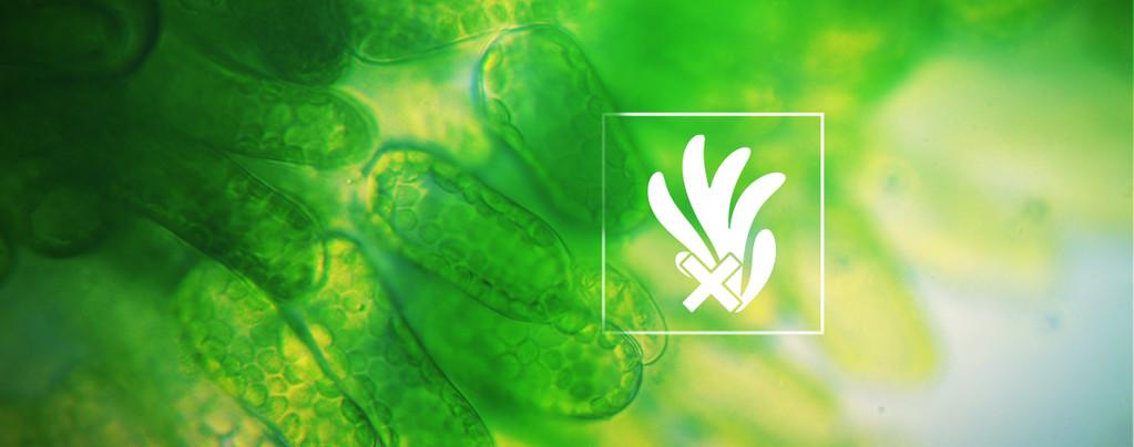 Het Voorkomen En Verwijderen Van Algen Bij Cannabis-Hydroponics