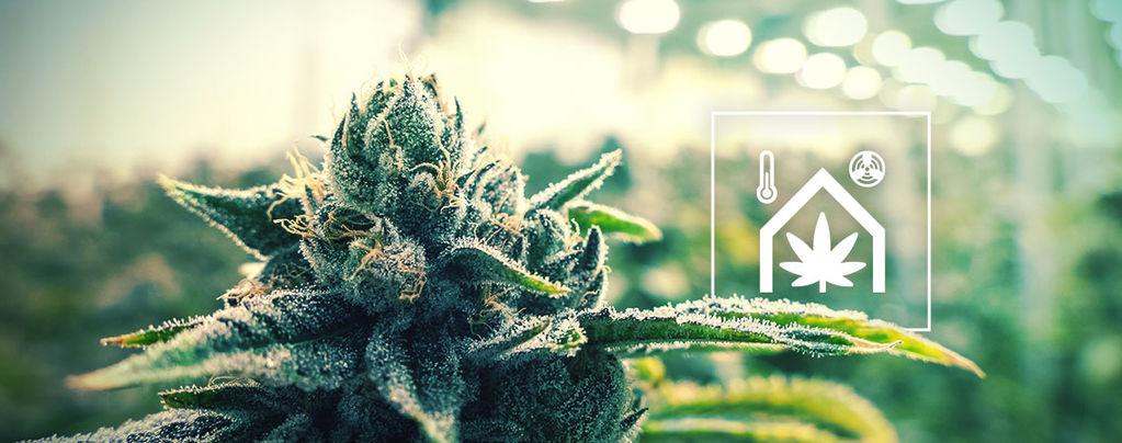 Het Jezelf Makkelijker Te Maken In De Cannabiskweekruimte