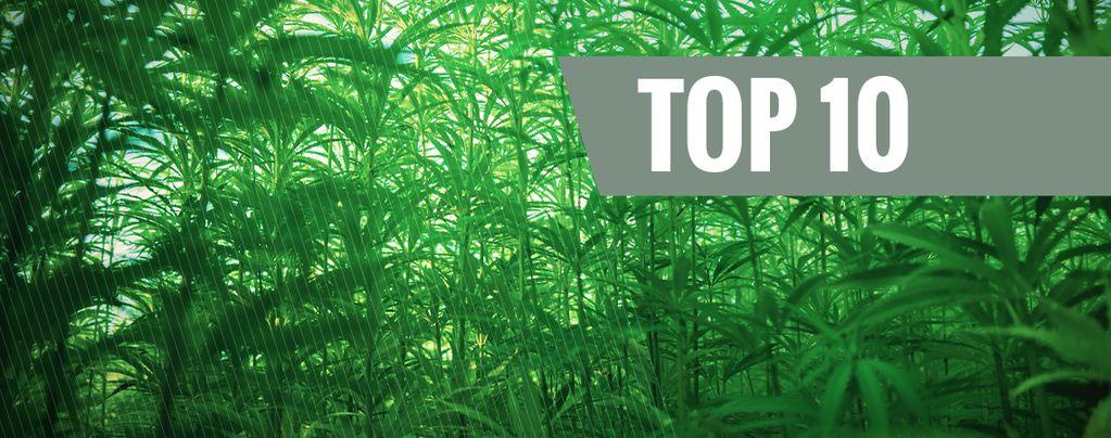 Top 10 Hoogste Cannabis Strains