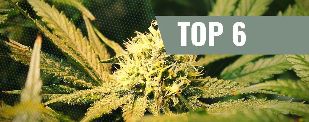 Cannabis Strains Met THCV